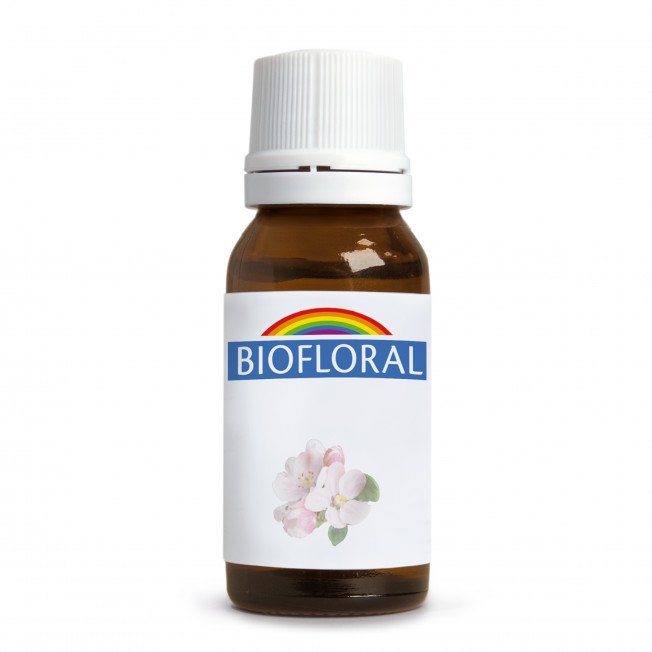 Willow - Sauce - 9 g   Biofloral